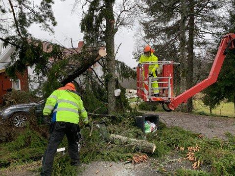 Brannvesenet fjerner trær som har falt ned over hus og trær i Drøbak natt til søndag som følge av sterk vind. Ingen ble skadd i hendelsen.
