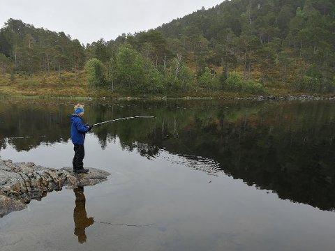 I uke 30 skal vi fiske på Nordmøre. Planen her er fiske i Solåsvannet i Surnadal på mandag, elvefiske i Driva på tirsdag, sjøfiske i Kristiansund på onsdag og torsdag.