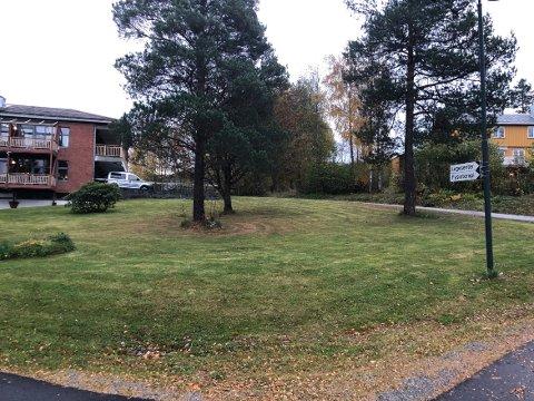 TOMTA: Det er på denne tomta sør for omsorgsboligene at det er planer om å sette opp nytt bygg med 15-20 omsorgsboliger på Skei i Surnadal. Nå vil kommunen se dette prosjektet mer i sammenheng med det store bildet av utbyggingsplaner av Helsehus på Bårdshaugen.