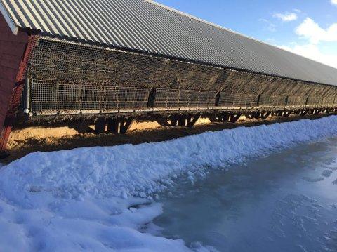KATTEKOLONI: Minken er forlengst borte fra burene, men 20 katter levde under svært dårlige kår på minkfarmen i Treungen.