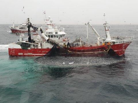 «Tunfisk» tok årets første sildefangst på Buagrunnen.