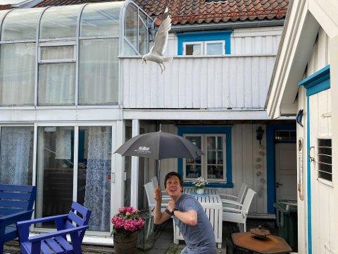 MÅKEOFFER: Jan Markus Johannessen sliter med at han blir angrepet av måker. Derfor beskytter han seg med paraply.