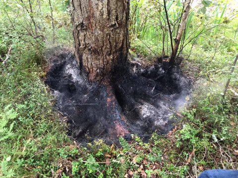 Røyk og flammer kom opp fra bakken rundt dette treet, 40-50 meter unna hytta til Mariann Ingeborg Pedersen på Flatsetøya.