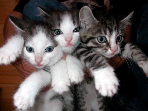 UTE AV KONTROLL: Katter som har blitt for mange, kan utgjøre et problem for enkelte eiere. (Arkivfoto)
