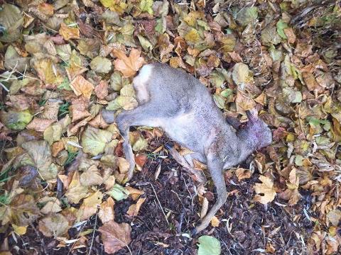 PASS PÅ: Flere tusen dyr blir påkjørt hvert år. Ta fareskiltene på alvor, avpass farten og vær ekstra oppmerksom vinterstid.
