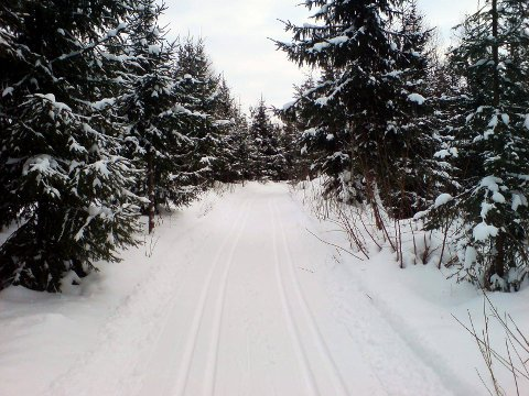 GODE FORHOLD: Du behøver ikke å reise langt for å ta deg en skitur. Kommunen har kjørt flere løyper i Tønsberg-området.