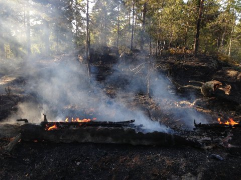 TØRT: Den sterke varmen den siste tiden har utløst stor skogbrannfare flere steder på Østlandet. Spesialvarselet fra yr.no gjelder også for Vestfold.