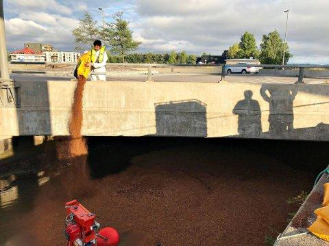 BARKER VIDERE: Under brua ved rundkjøringen ble det lagt ut 1.000 liter bark ved 20.00-tiden mandag kveld.