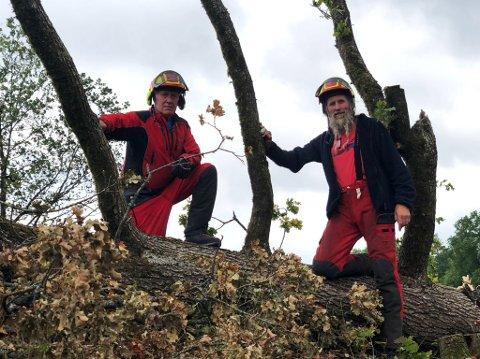 TREFELLERE: Olav Antonsen (til venstre) er en nestor innen trefelling, og arrangerer populære kurs i trefelling. Her sammen med Geir Røvik, som har skaffet trærne deltakerne øver seg på. Greinen på dette treet skal båtbygger Røvik bruke til å lage vikingskipskopier.