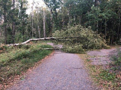 NEDFALL: Veivesenet frykter nedfall av trær i forbindelse med ekstremværet som skal treffe Østlandet i kveld.