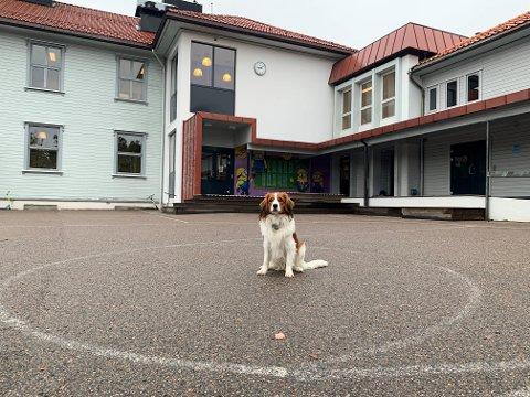 SKOLEHUND: Hunden Fox fungerer som en kosekompis, lekekamerat og som en motivator for skoleleie elever på Torød skole.