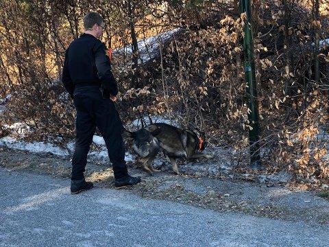 SØKTE MED HUND: Hundepatruljer søkte mandag etter gjenstander i forbindelse med overfallet.