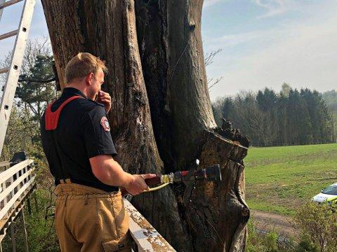 BRANT ORDENTLIG: Brannvesenet rykket ut fredag ettermiddag ut til brann i en trestamme som trolig var antent av glør fra et askebeger.