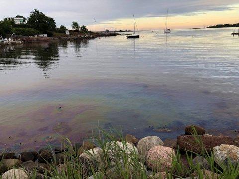 SKINNER: Bensinsøl ved Klopp skinner i strandkanten ved Klopp mandag kveld.
