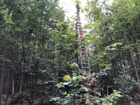 FALLSKJERMULYKKE: En ung kvinne ble hengende fast oppe i en høy bjørk.