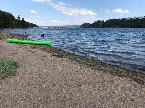 SANDODDEN: På denne stranda i Vear fant Thomas hundrevis av rustne spikre. – Det er absolutt ikke bra, sier han.