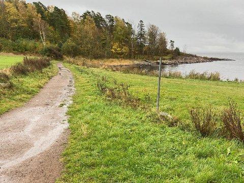 UGRESS: Steinar Elgvin forteller at det har begynt å vokse ugress der hekken tidligere sto.