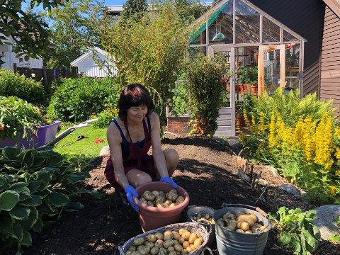 KJØKKENHAGE: I fjor satte Margunn Ueland av 14 kvadratmeter av sin hage til potetåker. Avlingen har vart helt fram til nå. Foto: Rolf Norås