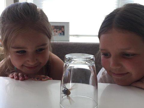 MEGAVEPS: Billie Aaberge Foss (6) og Kari Olivia Hammelow-Berg Øye (11) studerer vepsen.