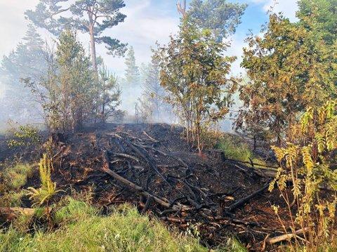 BRANN: Brannvesenet fikk raskt kontroll på skogbrannen.
