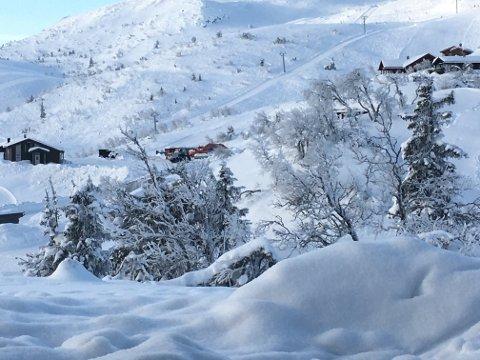 RYPER: Det er ikke enkelt å skille snø fra fugl, men i treet utenfor Roars vindu sitter rypene og forsyner seg grådig av bjørkeknopper.