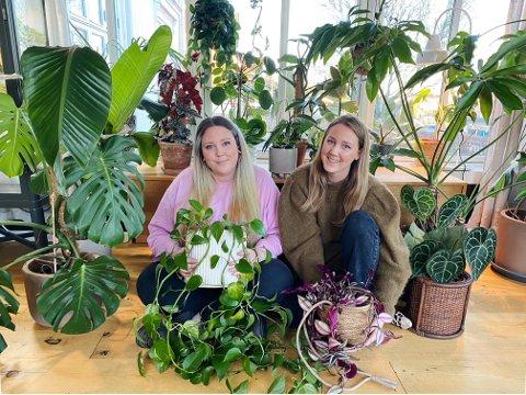 GIR GLEDE: Da koronahverdagen kom og de fikk mer tid hjemme, startet Ida og Sara Mathiassen å samle planer. Nå sitter søstrene med hver sin lille jungel.