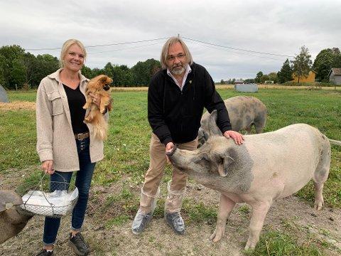 TILBAKE PÅ GÅRDEN: Regissør Victor Kossakovskys var nylig tilbake på Grøstad for å hilse på grisen Gunda som han og hans team har gjort filmstjerne av. Matmor Gry Beate Knapstad kan bekrefte at Gunda har noen primadonnanykker.