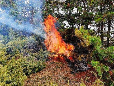 BRANT: Flammene sto etter at Knut Kjelsås kom ut til holmen på Langskjæra.