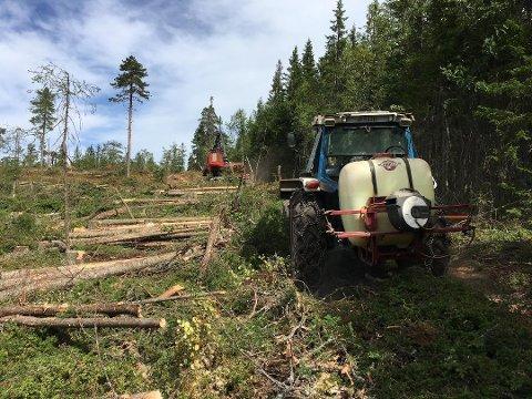 MÅ FORNYES: Med mindre man har en god grunn, plikter alle skogeiere å plante ut nye trær innen tre år etter siste hugst, for å sørge for at skogen opprettholdes.