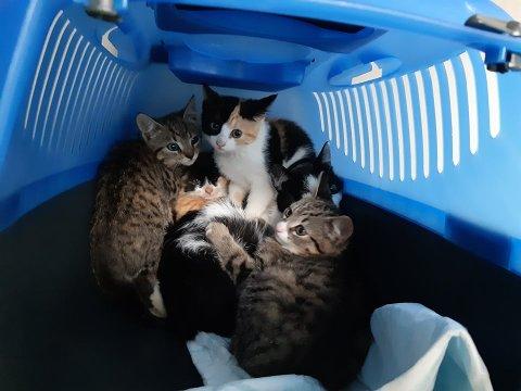 KATTE-BOOM: I lokalene på hjelpesenteret i Egge i Steinkjer er det onsdag 16 katter. I tillegg er 51 katter fordelt på til sammen 17 fosterhjem. På toppen av dette er dyrebeskyttelsen i besittelse av kaniner og hamstere – og et akvarium med gullfisker.