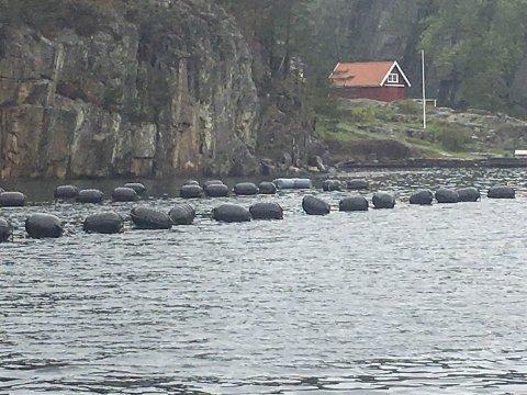 Bota: Ett av de fem blåskjellsanleggene Agder Mussels fikk konsesjon til i Tvedestrand. De har ligget uvirksomme omtrent helt siden de kom på plass for over 10 år siden.