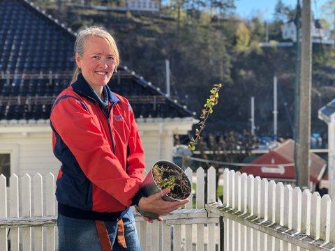 Den spede starten: Denne ildkvede-planten skal i jorda i Museumshaven. Der skal den få følge av mange andre gamle kulturplanter.