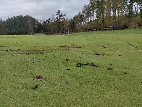 Disse sporene viser tydelige spor etter bilkjøring på golfbanen. Foto: Asbjørn Sauesund