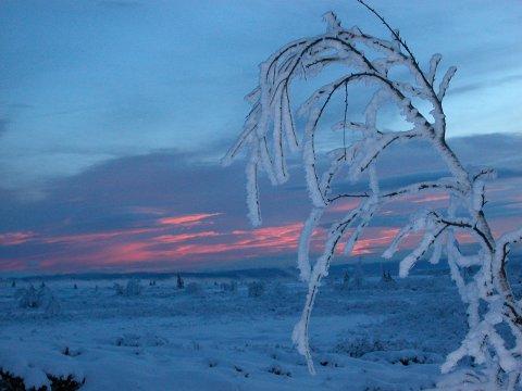 Vinternstemning på Stølsvidda.