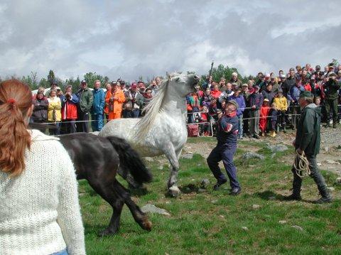 I 120 år har det vært hesteslepp på Lenningen, nå er det slutt.
