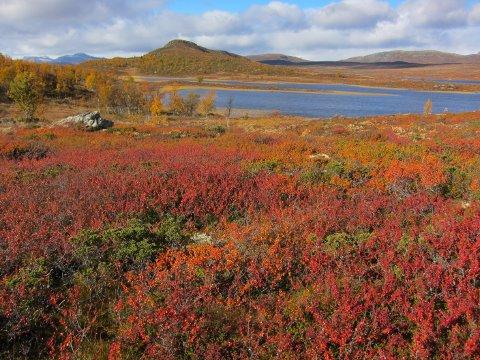 Fargerikt: September baud på fine dagar med fantastiske fargar. Her mot Massingtjednet og Brummaknappen i fjellet i Øystre Slidre..