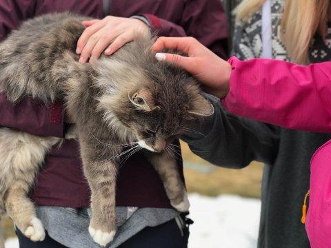 Kontakt: Inn på tunet-gardene skal hjelpe folk med behov for kontakt med dyr og andre gjøremål på gard.