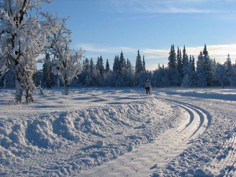 Vinterstemning: Kuldegrader og rikeleg med snø har gjeve ein flott vinter for dei som er glade i å vera ute på ski. Her frå Skrautvålsåsen, der Leirin skiløyper syter for velpreparerte spor.