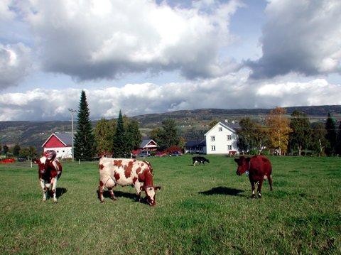 Møte: Åpent møte for beitebrukere i Vang