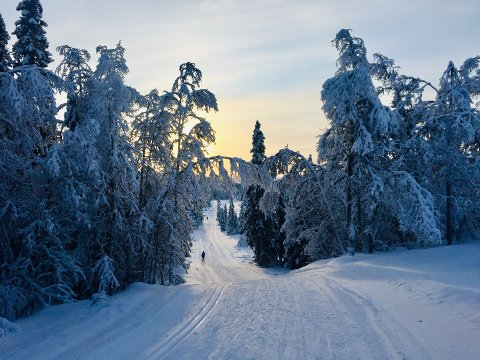 Leirin: Slik så det ut i Leirin Skiløyper 1. juledag, på veg mot Skardåsen. Det var verdt turen.