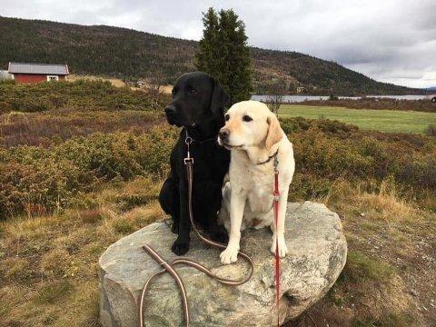 Førerhunder: Ilo og Embla på en stein. Begge er førerhunder i Valdres.