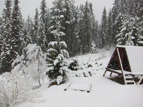 Laurdag: Tett snøvêr og 10 centimeter snø på plenen i Rogne klokka sju om morgonen 11. mai.