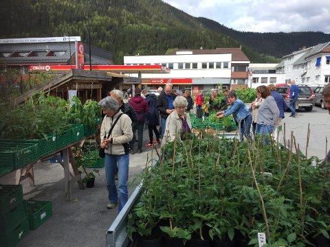 Etterspørselen etter grønnsaksplanter har vært over all forventning hos fengselet i år