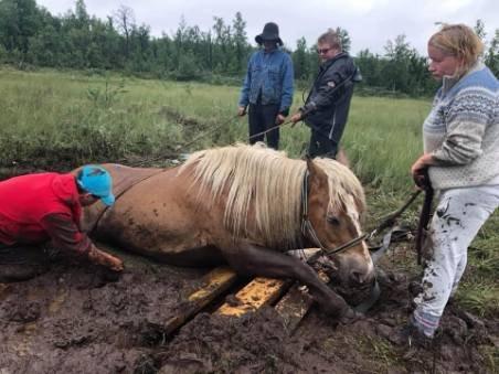 Enga Selina hadde gått seg ned i myra bare 50 meter fra gheterhytta. Og ble reddet takket være mange gode hjelpere. Foto:Privat
