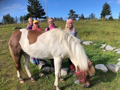 Hesteglede: Sunniva (11), Hedda (9), Julie (11) og Marie (11) har ikke kjedet seg et sekund på friluftsskole i 2020. Denne hesten fikk kos og stell av jentene før rideturen ved Bjødnastølen Islandshester.