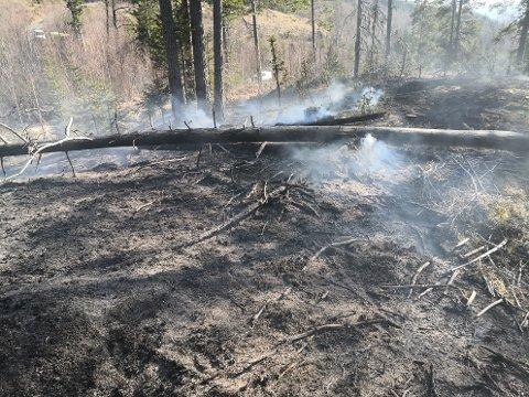 SKOGBRANN: Mandag begynte det å brenne i et skogområde på Minnesund.