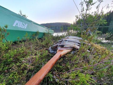 REKORD: Oslomarka fiskeadministrasjon melder at det aldri er blitt solgt flere fiskekort.