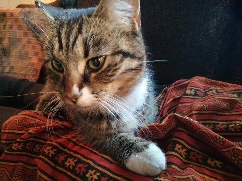 HJEMME IGJEN: Katten «Momsi» har på uforklarlig vis reist 20 kilometer på egenhånd.