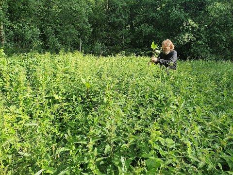 DUGNAD: Leder av Naturvernforbundet Follo-Moss, Kristian Østbye, under luking på onsdag.