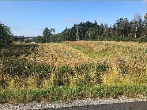KAN BLI BYGGET NED: Dette jordet ved Syverudveien skal bli hjemsted for det nye nasjonale senteret for vanninfrastruktur i Ås.